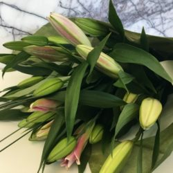 Lily Love at Stems