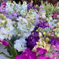 Fresh flowers at Stems